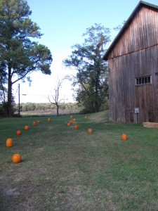 pumpkins on ground lined up next to side of barn