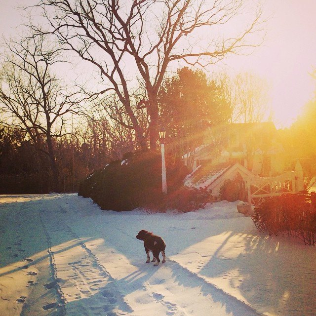 dog walking down snowy path by combsberry inn cottage with sun beaming through