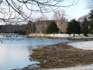 birds in water at combsberry inn surrounded by frozen ground and trees
