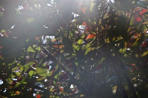 faint sunlight shining through leaves and branches