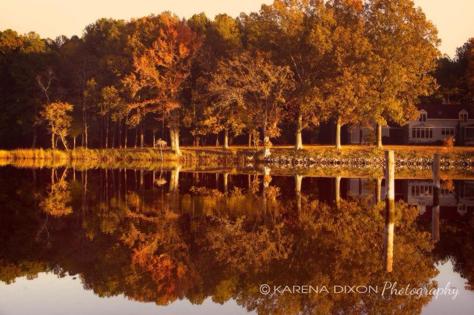 brown fall trees by waters edge with reflection in water