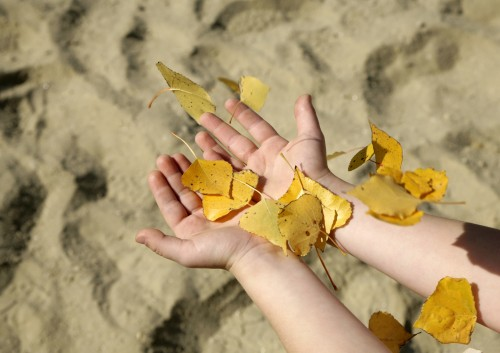 childs hand holding hands out with yellow leaves falling on beach